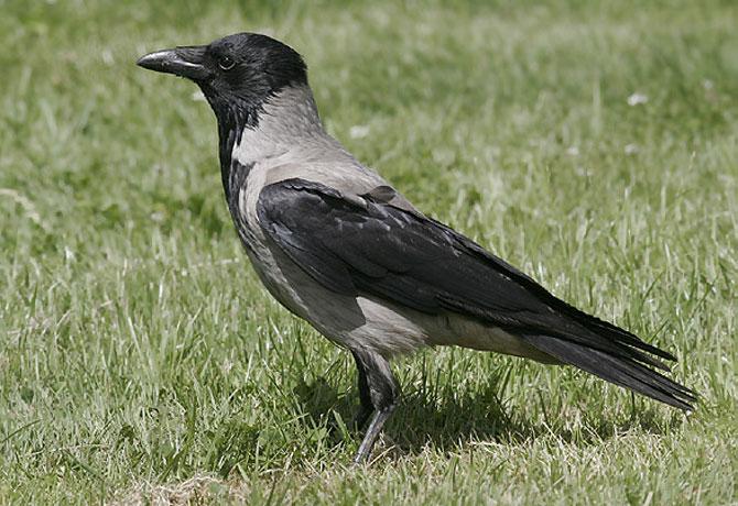 8-wrony-atakuja-studentow_2
